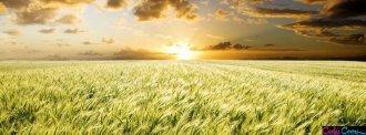 crops_field